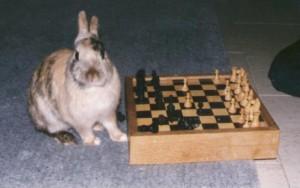 Na tien zetten kon Gerard geen konijnen meer uit de de hoge hoed toveren.
