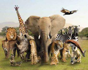 spreekbeurt-over-dieren